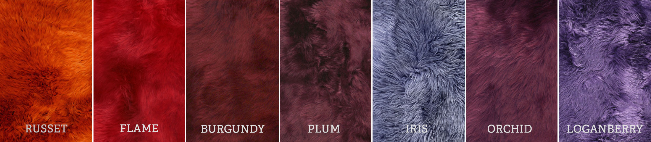 longwool-reds-purples